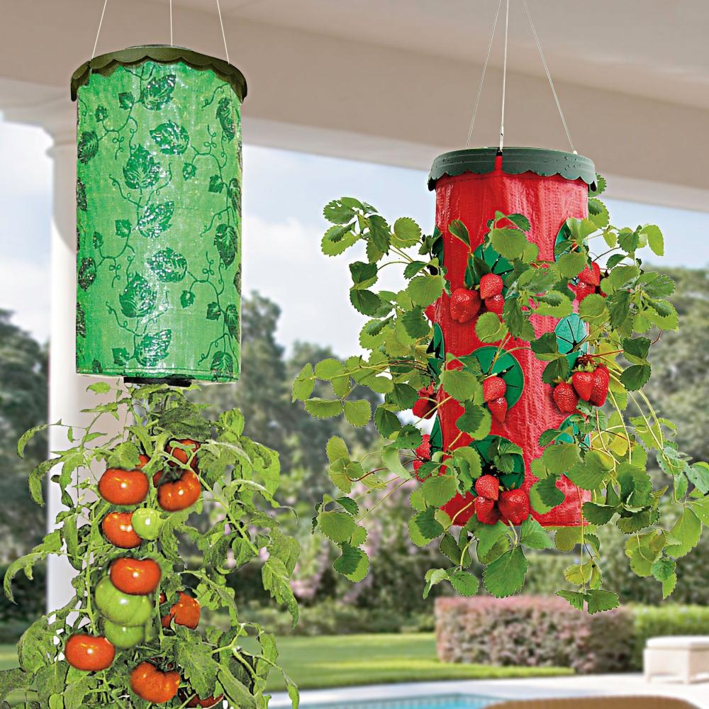 ανάποδη καλλιέργεια ντομάτας, βιολογική καλλιέργεια ντομάτας