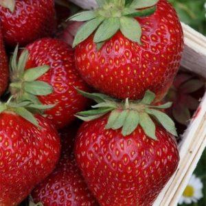 φράουλα βιολογική, βιολογική φράουλα, bio προιοντα, e-shop βιολογικα προιοντα,αγορα βιολογικων προιοντων,βιολογικά, βιολογικά καταστήματα, βιολογικά προιόντα, βιολογικά προϊόντα, βιολογικά τρόφιμα, βιολογική καλλιέργεια, βιολογικα βιολογικα αυγα, βιολογικα καλλυντικα, βιολογικα καταστηματα online, βιολογικα μαγαζια, βιολογικα προιοντα βιολογικα προιοντα e shop, βιολογικα