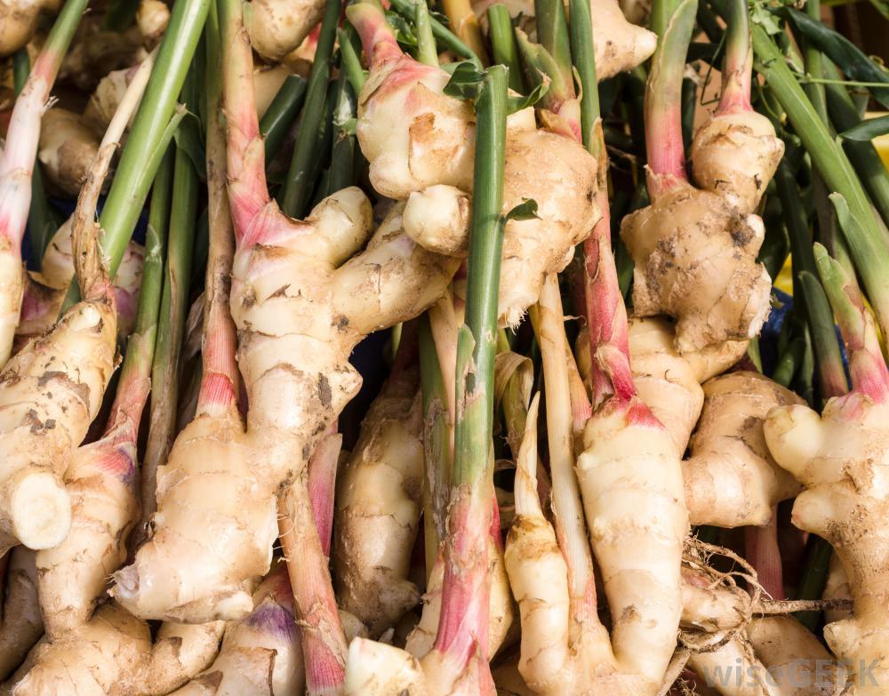 ginger riza