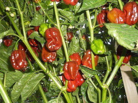 bio kaliergia laxanikon, biologika proionta, biologika laxanika, βιολογικά προϊόντα, βιολογικά λαχανικά, βιολογικά στο σπίτι σου,