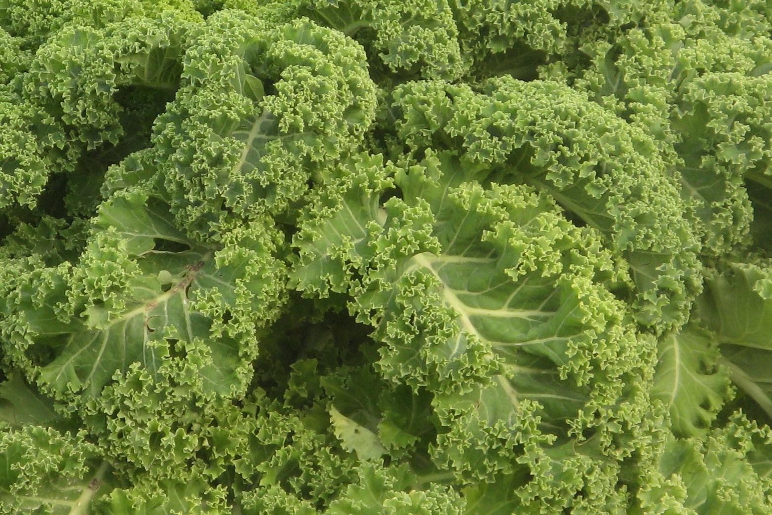 κειλ τσιπσ. biologiko Kale, bio προιοντα, e-shop βιολογικα προιοντα,αγορα βιολογικων προιοντων,βιολογικά, βιολογικά καταστήματα, βιολογικά προιόντα, βιολογικά προϊόντα, βιολογικά τρόφιμα, βιολογική καλλιέργεια, βιολογικα βιολογικα αυγα, βιολογικα καλλυντικα, βιολογικα καταστηματα online, βιολογικα μαγαζια, βιολογικα προιοντα βιολογικα προιοντα e shop, βιολογικα